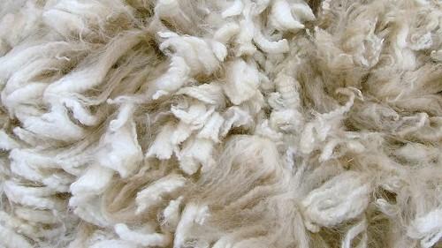 Učestvujte na Europskom danu vune 09. aprila 2021.godine